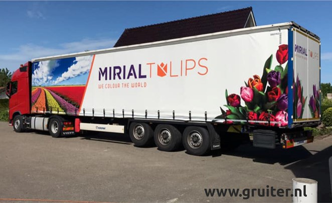 2020 - 030 Mirial Tulips