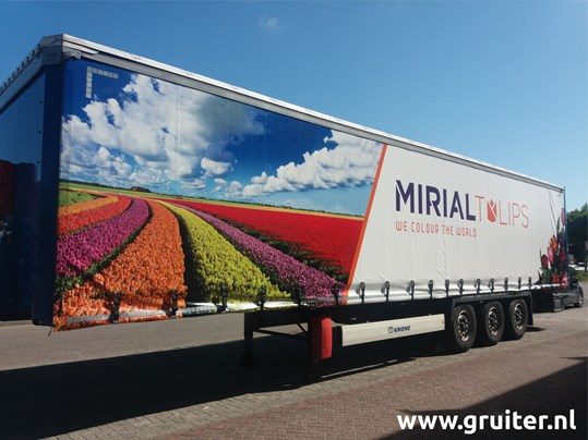 2020 - 028 Mirial Tulips